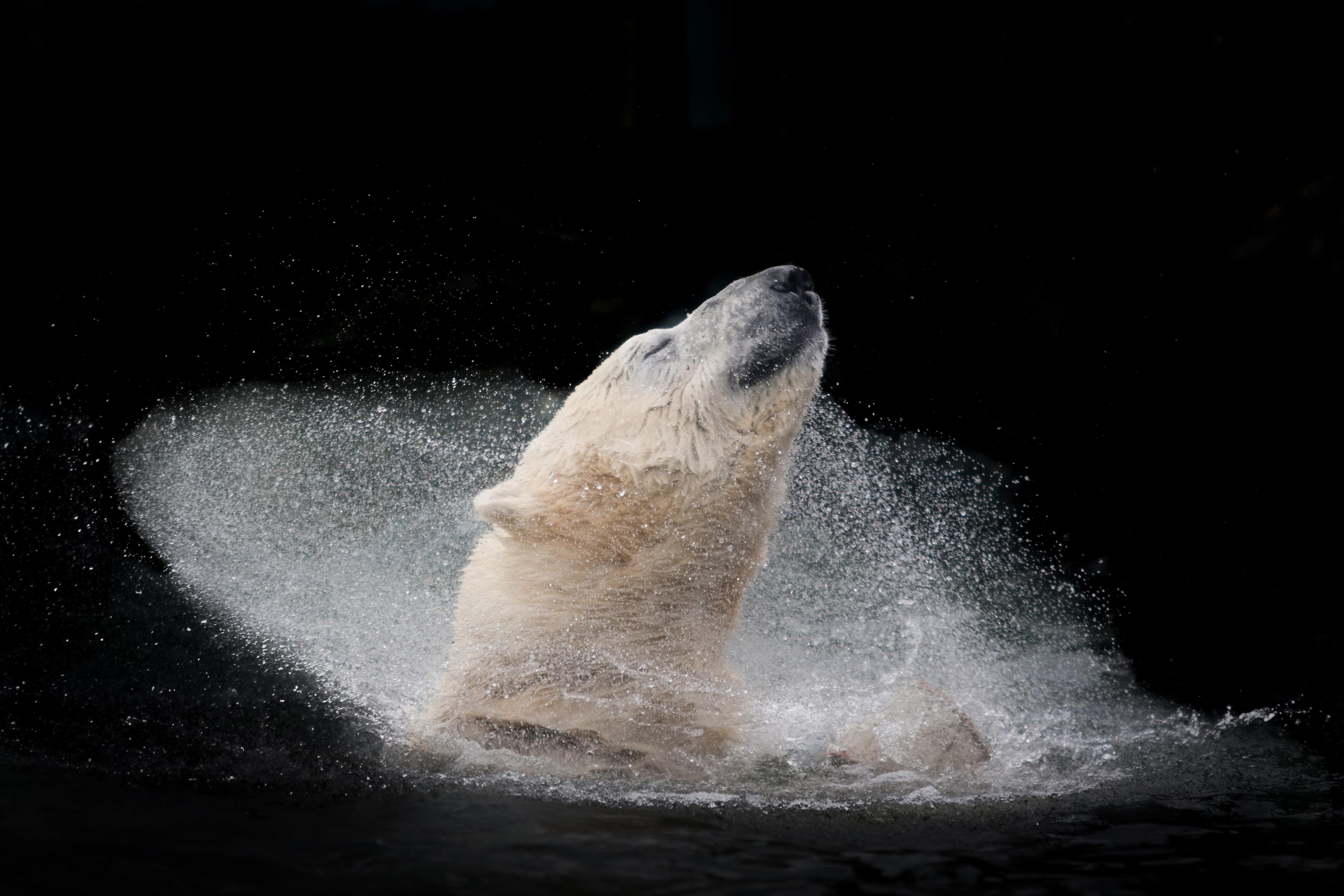 ©Michaela Šmídová, Czech Republic, Winner, Open Competition, Nature and Wildlife, 2016 Sony World Photography Awards